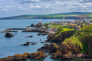 The fishing village of St Abbs seen from the southern side of St Abb's Head, Berwickshire, Scotland, UK, May 2017  -  Philippe Clement