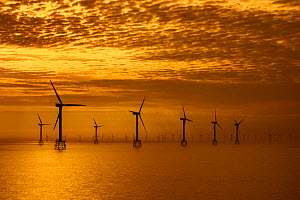 Wind turbines of the Thorntonbank Wind Farm, offshore windfarm off the Belgian coast in the North Sea at sunset  -  Philippe Clement