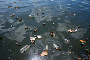 Plastic pollution floating on the surface of the water in the harbour of Havana, Cuba.  -  Alex Mustard
