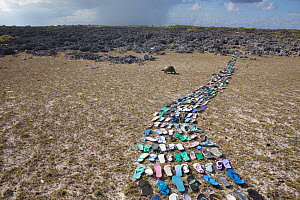 Pathway made of  plastic shoes ( flip flops) washed up on the beach  and collected within 20 metres of the middle of the picture. In the background is a Aldabra giant tortoise (Aldabrachelys gigantea)...  -  Huw Cordey