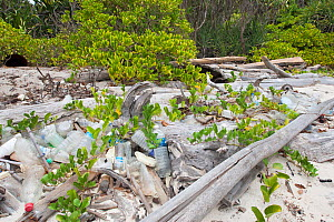Plastic waste, mainly bottles, washed up onto  beach of uninhabited island in the South China Sea. - Rick Price
