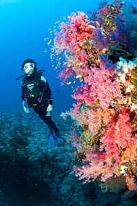 Scuba diver and soft coral (Dendronephthya sp) South Point dive site, Sanganeb reef, Sudan, Red Sea  -  Franco  Banfi