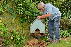 Hedgehog house positioned in a suburban garden along with straw bedding and leaf litter by home-owner, Chippenham, Wiltshire, UK, September.  Model released.  -  Nick Upton