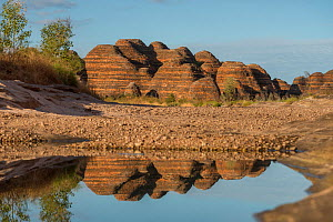 Water reflections in the Bungle Bungle Range, beehive shaped karst sandstone formation formed by erosion, with dark lines formed by cyanobacteria. Purnululu National Park, UNESCO World Heritage Site,... - Jurgen Freund