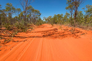 Red sandy roads from Broome to Cape Leveque, Kimberley, Western Australia. July 2016.  -  Jurgen Freund