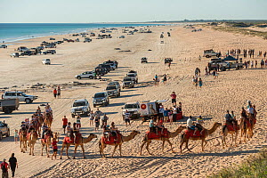 Cable Beach with people riding Dromedary camels (Camelus dromedarius) and many vehicles driving along the beach, Broome, Western Australia. July 2016. - Jurgen Freund