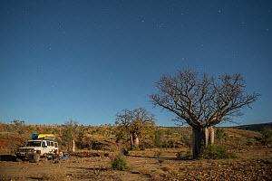Australian baobab  / Boab trees (Adansonia gregorii) against the Cockburn Ranges with the four-wheel drive car parked, Kimberley, Western Australia. June 2016. - Jurgen Freund
