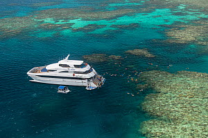 Aerials of snorkellers swimming the reefs of the Great Barrier Reef from the dayboat Evolution, Great Barrier Reef, Queensland, Australia October 2016.  -  Jurgen Freund