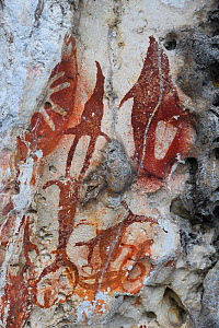Ancient rock art paintings, from cave that caved in and exposed them to the light of day, Raja Ampat, Western Papua, Indonesian New Guinea - Staffan Widstrand
