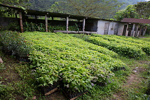 Tree nursery to grow trees for reforestation,  Buenaventura Ecological Reserve, Ecuador, January. - Doug Wechsler