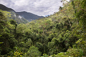 Subtropical Forest, Copalinga Reserve, Ecuador, December.  -  Doug Wechsler
