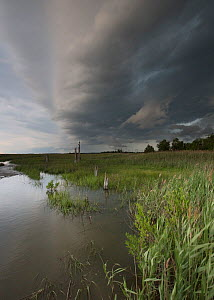 Approaching storm over Moore's Beach, Delaware Bay, New Jersey, USA, June.  -  Doug Wechsler