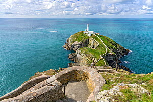 South Stack Lighthouse situated off Holy Island near Holyhead Anglesey, North Wales, UK, September.  -  Alan  Williams