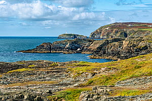 Cliffs at Porth y Gwin bay viewed from the Isle of Anglesey Coastal Path, part of the South Stack RSPB Nature Reserve, showing South Stack lighthouse in the background, Holy Island, Anglesey, North Wa...  -  Alan  Williams