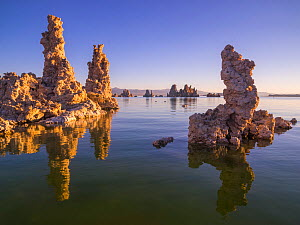 Tufa towers along Mono Lake, which form as sodium carbonate reacts with calcium rich spring water. Mono Lake, California, USA. September.  -  Floris  van Breugel