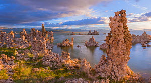 Tufa towers along Mono Lake, which form as sodium carbonate reacts with calcium rich spring water. Mono Lake, California, USA. June 2017.  -  Floris  van Breugel