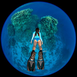 RF - Circular fisheye photo of a woman snorkelling towards a coral reef. Temple, Sharm El Sheikh, Sinai, Egypt. Red Sea. Model released. (This image may be licensed either as rights managed or royalty...  -  Alex Mustard
