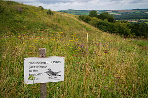 Sign warning of ground-nesting birds, Meadow pipits (Anthus pratensis), Old Winchester Hill National Nature Reserve, South Downs National Park, UK. August 2017.  -  Adrian Davies