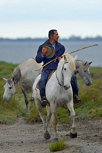 Gardian on Camargue horse rounding up bulls, Camargue, France, May 2017. - Loic Poidevin