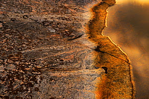Patterns in rock at the edge of a rock pool, St. Anna Archipelago, Sweden, August 2014.  -  Werner Bollmann