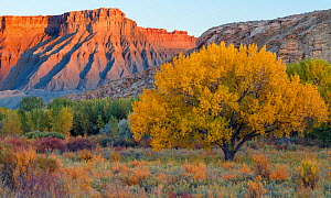 South Caineville Mesa, in the Upper Blue Hills at sunset, at the junction of the  Caineville Wash and the Fremont River,  Utah, USA, October 2017.  -  Jack Dykinga