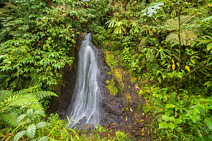 Waterfall  in Talamancan montane forest, Braulio Carrillo National Park, Costa Rica. - Phil Savoie