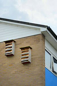 Two multiple nestboxes for Common swifts (Apus apus)  attached to the wall of a block of flats, Edgecombe, Cambridge, UK, July.  -  Nick Upton