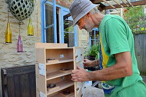Roger Beckett building a nestbox for Common swifts (Apus apus) with nest cups, access ports for nest inspection and CCTV cameras, to be fitted in a church tower, Hilperton, Wiltshire, UK, June. Model... - Nick Upton