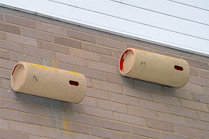 Two nestboxes for Common swifts (Apus apus) made from plastic piping, attached to the wall of a block of flats, Edgecombe, Cambridge, UK, July.  -  Nick Upton