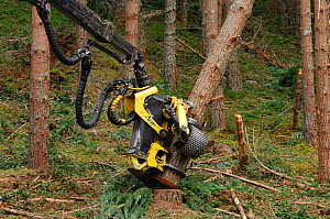 Timber harvesting machine felling and processing conifers, Inverness-shire, Scotland, August 2007  -  Laurie  Campbell