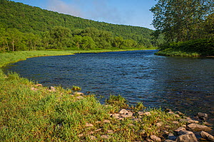 Blue ribbon trout stream, a branch of the Delaware River, New York,  USA, May.  -  Phil Savoie