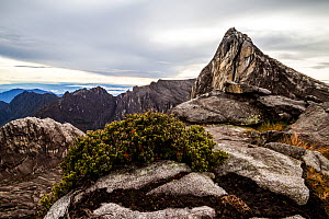 Ugly sister peak (4032m), Mount Kinabalu, Borneo, May 2013. - Paul Williams