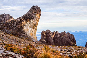 Oyayubi Iwu Peak 'the thumb' (3975.8 m) and the pinnacles. Mount Kinabalu, Borneo. May 2013. - Paul Williams
