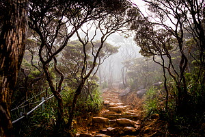 Trail through the cloud forest, Mount Kinabalu Borneo, May 2013. - Paul Williams