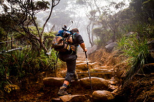 Climbing through cloud forest, Mount Kinabalu Borneo, May 2013. - Paul Williams