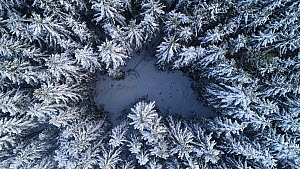 Aerial shot ascending from a coniferous forest in snow, Akershus, Norway, January 2018. - Pal Hermansen