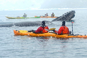 Humpback whales (Megaptera novaeangliae) and Kayakers.    Ciera Cove.  Lemaire Channel.  Antarctic Peninsula. January 2017. - Mike Potts