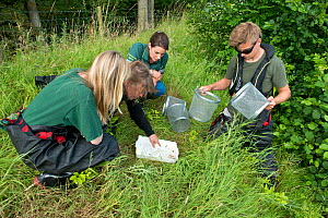 Environment Agency Fishery and Biodiversity Officers observing Minnow trap catch from an irrigation pool, during national programme to eradicate Topmouth Gudgeon, Herefordshire, England, UK, July 2017... - Will Watson