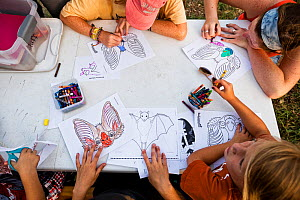 Children learning about Mexican Free-tailed bats (Tadarida brasiliensis), and make 'bat masks' while waiting for the bats to emerge at Bracken Cave. Bracken Cave Preserve, San Antonio, Texas, USA. Jul... - Karine Aigner