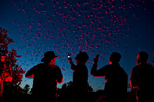 Tourists viewing Mexican free-tailed bats (Tadarida brasiliensis) leaving maternity colony at night to feed. This viewing is organized by Bat Conservation International. Bracken Cave, San Antonio, Tex... - Karine Aigner