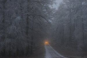 Car headlights on forest road in winter, Retz Forest, Aisne, Picardy, France, December 2016 - Jouan Rius