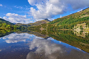 Reflections in Llyn Gwynant, Glaslyn valley looking north east, Snowdonia National Park, North Wales, UK, September. - Alan  Williams