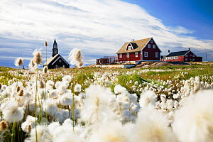 A church in Ilulissat on greenland with Cotton grass in the foreground - Ashley Cooper