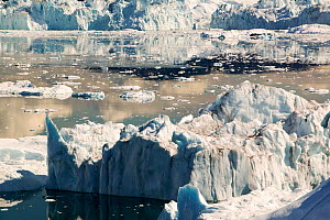 Icebergs calved from Jacobshavn glacier or Sermeq Kujalleq, Greenland, July 2008. - Ashley Cooper