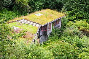 Turf roof on eco houses at the Centre for Alternative Technology in Machynlleth, Wales, UK, July,  -  Ashley Cooper