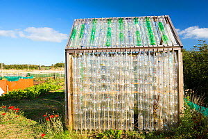 Greenhouse made from waste plastic drinks bottles in the community garden at Mount Pleasant Ecological Park, Porthtowan, Cornwall, UK. September 2013.  -  Ashley Cooper