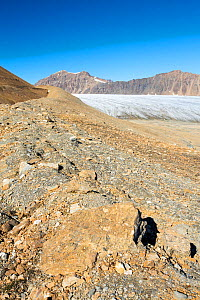 Glacier at Recherchefjorden on Western Svalbard with moraine showing the massive rate of retreat in the last 100 years. Svalbard, Norway, July 2013. - Ashley Cooper