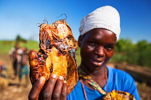 Dried cat fish for sale in the Shire Valley, Malawi. March 2015. - Ashley Cooper