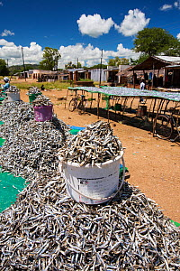 Fish caught in Lake Malawi, on drying racks at Cape Maclear, Malawi, Africa. - Ashley Cooper