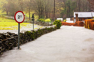 Flood waters on the Under Loughrigg Road, Ambleside, by Rothay Bridge, Lake District on Saturday 5th December 2015, during torrential rain from storm Desmond. England, UK, December 2015. - Ashley Cooper